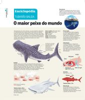 Whale Shark Infographic by pauloomarcio
