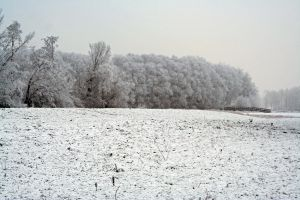 winterland 32 by priesteres-stock