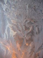 frost flower 8 by Hermit-stock