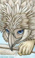 Harpy-Type Eagle by synnabar