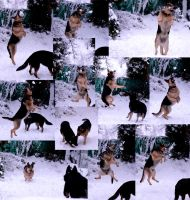 Fun in the snow with my dogs :) by debahi