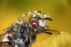 Fly 'n' droplets by biretta