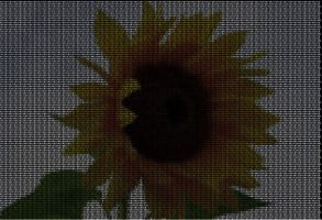 Everything is Math - Sunflower by Ften