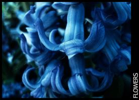 Flower-11 by MARCOSVFG
