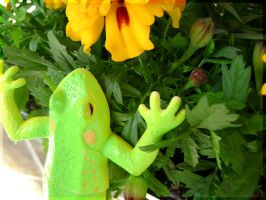 Frog and flowers by fionaadam