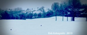 Frolicking in the Snow by Rob93z20