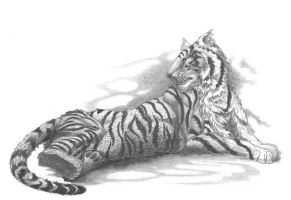 Laying tiger by AldemButcher
