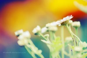 Spring vibrance by nhuthanh