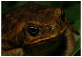 Toad by CGPhotography
