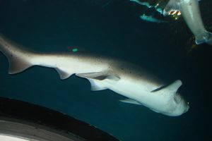 Shark 4 by Ozzyhelter