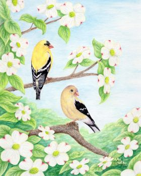 Goldfinches in Dogwood by Wolf-Daughter