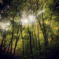 Forest - Erindale Park by ZaeLynn