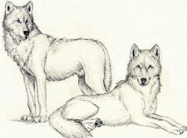 Wolves by Immortal-Angel1994