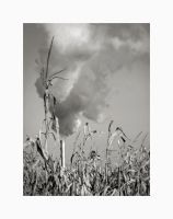 Corn Stack by solodaddy