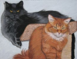Two Cats in Pastel by geraden22