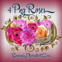 4 PNG Rose Set by Romenig