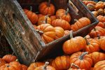 Crate Of Pumpkins by JustinDeRosa