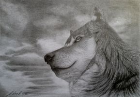 The prestigious Wolf! by Udvardi
