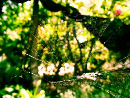 Spider Web by windpacer04