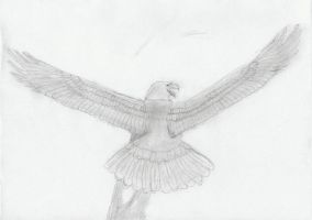 Eagle Wings Stretched by Arbit-er
