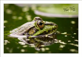 Fiber Frog by sG-Photographie