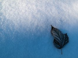 Frozen Leaf by do7slash