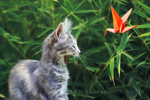 say meow by Orwald