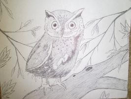 Baby Owl by AnaturalBeauty