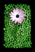 Flower on Peas on Black by sourcow