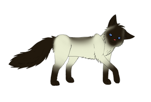 Siamese cat for Megz2637 by squalled-101