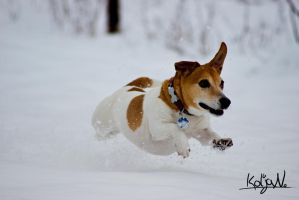 Play in the snow :) (Jack russel) by KoljaNa