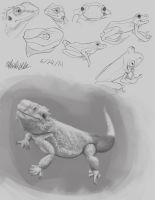 Late night Amphibians and Reptiles by the-b3ing