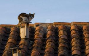 cat on the roof by eipar