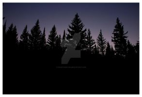 Pine Trees at Night AF Canyon by houstonryan