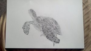 My drawing of a sea turtle by PaulDS89