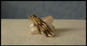 Polecat Claws by CabinetCuriosities