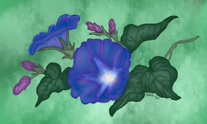 Morning Glories by Renttelb17