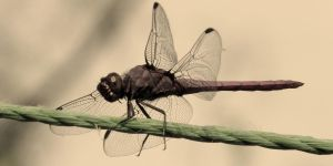 Tightrope walker - Sepia tone by lifeinedit