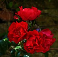 red bunch by awjay