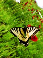 .:the Beauty of a Butterfly:. by smilejustbcuz