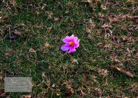 lonely flower by amirajuli