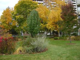 Canadian Fall Colours 5 by Aswang301