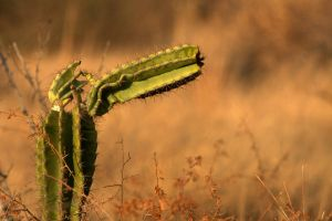 Lonely Cactus by cathy001