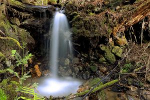 Whittermore Gulch II by FeralWhippet