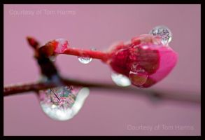 Spring Jewels by acutely