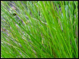 Grass by Jonothelad