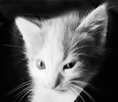 cat by LinaBrash