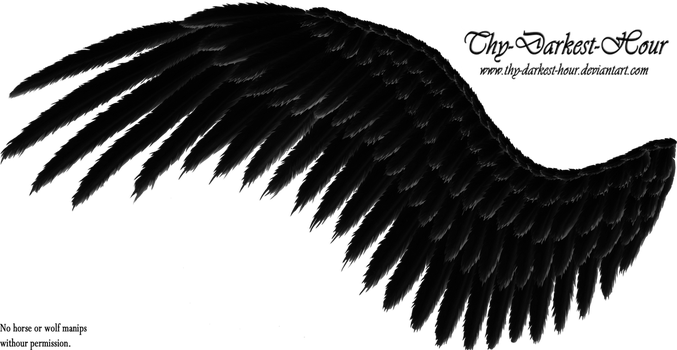 Feathered Wings - Black by Thy-Darkest-Hour
