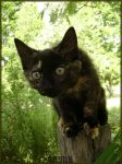 Curious Little Tortie by Vincent-Nocturnal