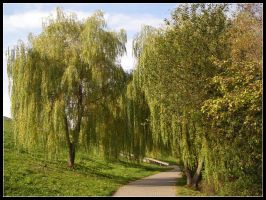 Trees in park by bwanot